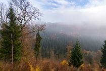 Nebel über der herbstlichen Wald-Landschaft von Ronald Nickel