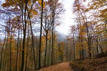 Durch den lichten Herbstwald by Ronald Nickel