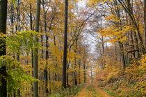 Waldweg durch den goldenen Herbstwald by Ronald Nickel
