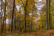 Durch den Herbstwald auf goldenem Pfad by Ronald Nickel