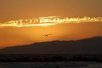 Golden Kalifornia Sunset by art-imago