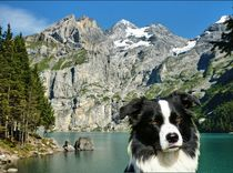 Border Collie vorm Öschinensee von kattobello