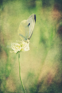 Little Butterfly von AD DESIGN Photo + PhotoArt