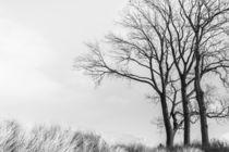 Baum in der Düne von jazzlight