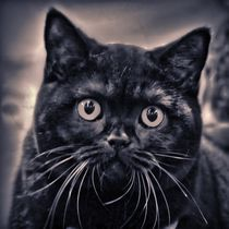 Black Cat von kattobello