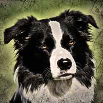 Retro Border Collie by kattobello
