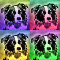 Pop Art Border Collie 3 by kattobello