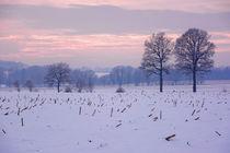 Ein stimmungsvoller Winterabend by gscheffbuch