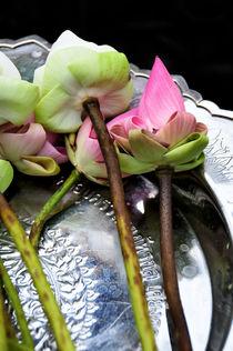 Lotos Flower by Sylvia Seibl