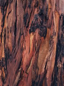 Close-up of shedding bark of Eucalyptus tree - shades of brown. von Ro Mokka