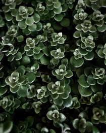 Green succulent plants. by Ro Mokka