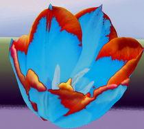 Tulpe by Karlheinz Milde