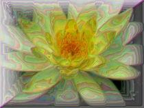 gelbe Blüte by Karlheinz Milde