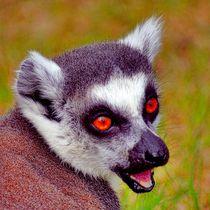 Katta Lachen von kattobello