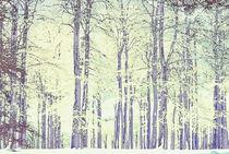 Winterwald von Karlheinz Milde