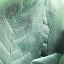 Leaves von Andrei Grigorev