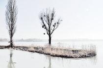 Winter im Europareservat Unterer Inn von Chris Berger