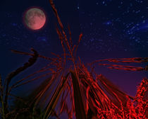 Corn with moon and stars by Michael Naegele