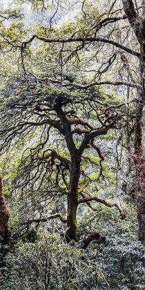bhutanese mountain forest von anando arnold