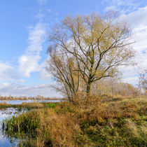 Willow  Close to the Dnieper River von maxal-tamor