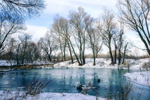 Winter Trees  Close to the Dnieper River von maxal-tamor