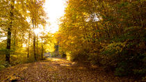 Die Sonne im goldenen Herbst von Ronald Nickel