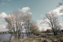 Autumn Trees  Close to the Dnieper River von maxal-tamor