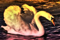 Swan in the Evening von kattobello