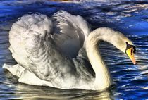 Swan in the Sun light von kattobello