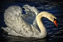 Swan in the Mid Night von kattobello