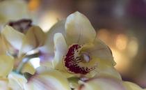 Orchideen / 2 von Heidi Bollich