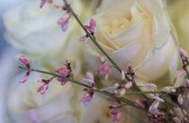 Weiße Rosen / 1 by Heidi Bollich