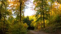 Der Herbst im bunten Mischwald von Ronald Nickel