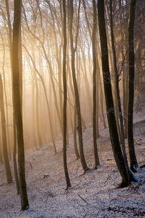 Nebellicht im Winterwald von Thomas Matzl