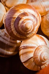 Snail Shells von maxal-tamor