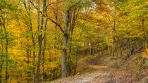 Wandern im goldenen Herbstwald von Ronald Nickel