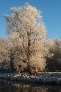 Winterbaum von Frank  Kimpfel