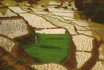 Reisfelder von Karlheinz Milde