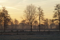 Morgendämmerung am Niederrhein von Frank  Kimpfel