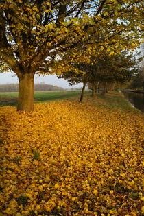 Herbst am Niederrhein von Frank  Kimpfel