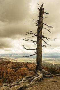 Der Baum im Bryce Canyon by Andrea Potratz