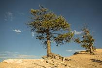 Der Baum by Andrea Potratz