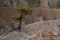 Mitten auf den Felspyramiden des Bryce Canyon by Andrea Potratz