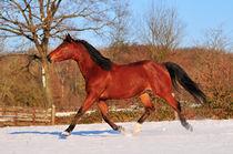 Winterpferd von Dorothee Rund