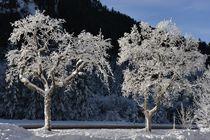 Wintertraum by heiko13