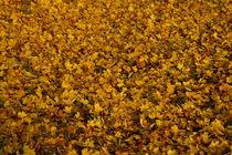 Blätterteppich by Frank  Kimpfel