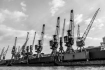 historic cranes in the harbour of Hamburg by anando arnold