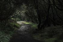 Waldwege von Johanna Fülscher
