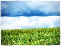Field Great Sky von Sandra  Vollmann
