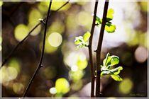 Small Leaf Natur Details von Sandra  Vollmann